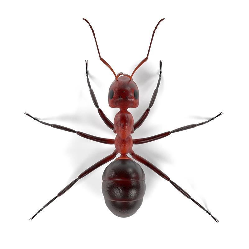 Ameisenbekaempfung
